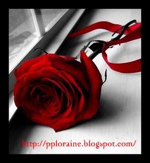 Primeira Página Frase Da Semana Um Amor Para Recordar