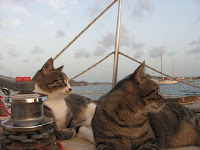 Willow & Buffy on the foredeck for Sundowner Time