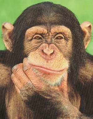 thinking...thinking....