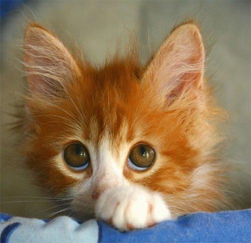 Arkham Asylum Lindo-gatito