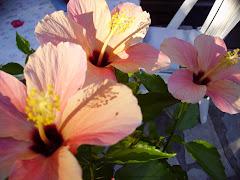 Fleur éphémère mais lumineuse
