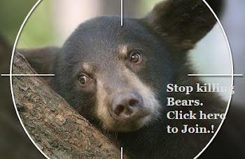 Stop Killing Bears!