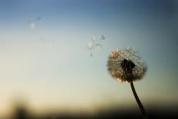 make a wishhhh.....