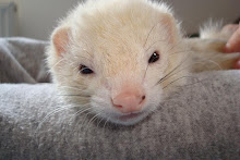 Fritzy the Ferret