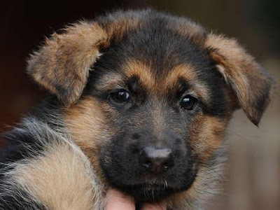 Dogs pictures / fotografije pasa Papst-hund-lea