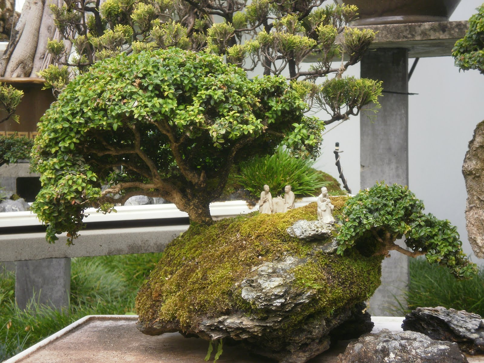 The Tree Blog Chinese Garden Sidney Australia