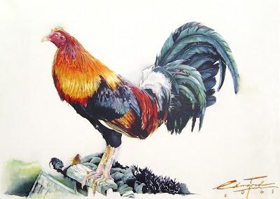 gallo negro pinoy