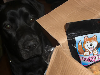 Picture of Duchess's face beside TOBY'S package, she has a, can I have it? Face...