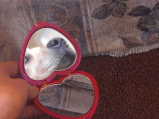 Picture of my compact heart mirror - in the mirror is Toby's face