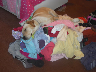 Another picture of Toby sleeping on a pile of clothes/blankets, this is a different pile...