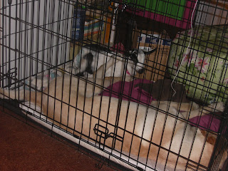 Picture of Toby and Fresca in the dog crate - both are sleeping