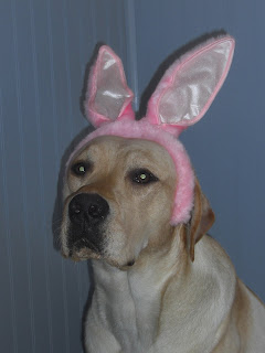 Close up picture of Toby's head, he is wearing pink bunny ears