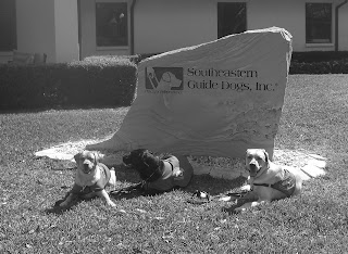 Black/white picture of Cassie, Duchess & Toby in front of the SEGDI stone