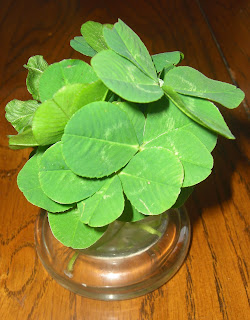 Close up picture of my 4 leaf clovers in the vase