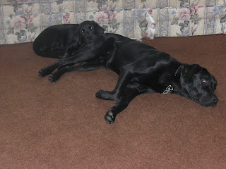 Picture of Rudy and Sparkie sleeping. Rudy's resting his head on Sparkie's bottom.