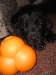 Photo of the orange odd shaped toy in front of Rudy - who cares NOTHING about the toy :)