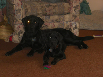 Photo of Rudy laying with Sparkie, both are staring at the camera - but Sparkie has a glowing red eye