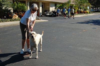 Picture of (a dog) who is yellow with some tan markings. He is standing beside a volunteer dog walker - I think he looks like Toby!