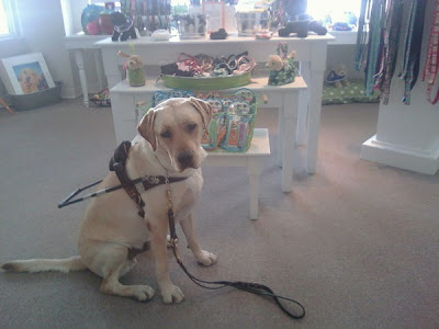 Picture of Toby in harness down at the school - a picture one of the trainer's took
