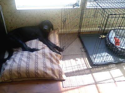 Picture of Rudy laying down on a dog pillow right outside of his crate