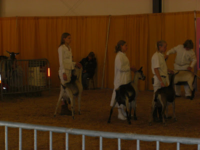 Picture of my raiser showing dairy goats, she's on the far left with one of her goat's - Skittles
