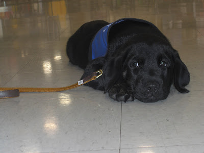 Picture of Rudy on his first shopping trip in May 2010 - he's in a down-stay in coat looking soo cute!
