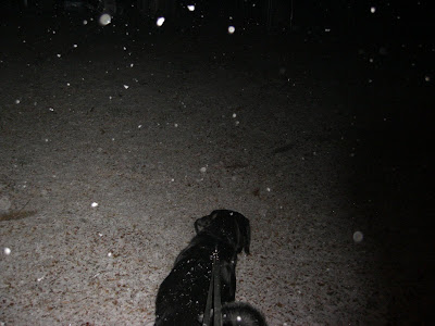 Picture taken Christmas night - when it first started snowing - Rudy is just out walking on leash in this picture