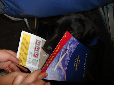 Picture of Rudy looking at the safety card provided on the airplane (during our guide dog airport meeting)