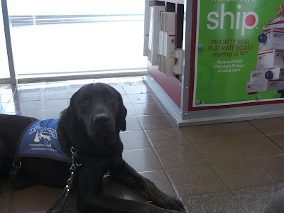 Picture of Rudy in a down-stay in coat at the post office - there is a priority mail sign behind him - we were at the post office so Rudy could mail the prizes to the winners of his Holiday Contest