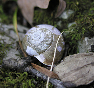 tiny snail on a mossy stump found on my recent walk in the woods