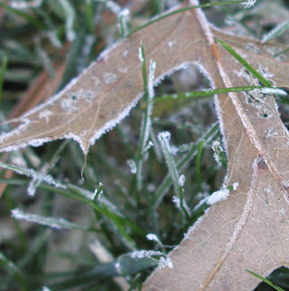 frosty brown leaf in green grass