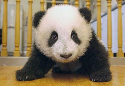 Regalo al de arriba Oso+panda