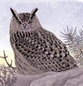 eagle owls in Britain