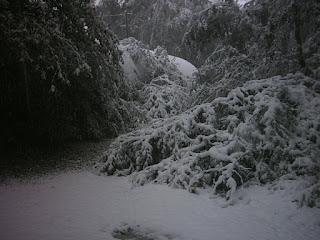 Snow on path.