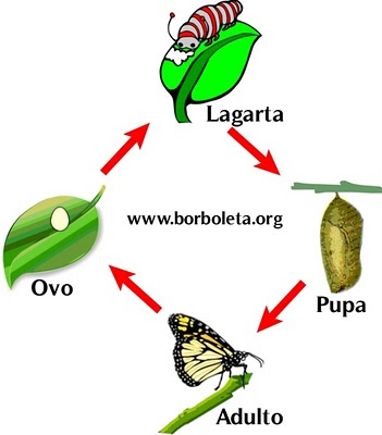 Ciclo de vida da Borboleta