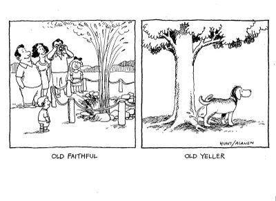 book report over old yeller