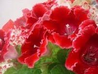 Ganhei estas flores lindas do meu Amor