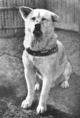 HACHIKO, MI HEROE