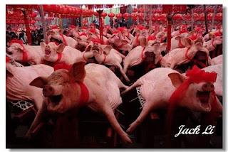 Большие гонки свиней