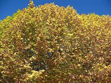 Outono -em amarelo e verde