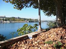 Outono no Mondego