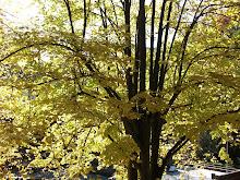 Outono - o cair da folha