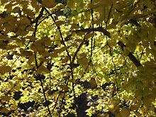 Outono - mais amarelo
