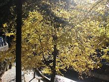 Outono em amarelo e castanho