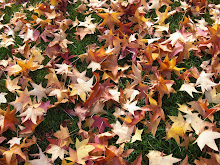 Outono e mais folhas