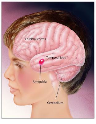 grijs gebied hersenen wat is dit