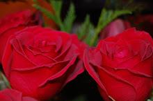 flores de mami