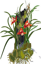 the illustrated orchid