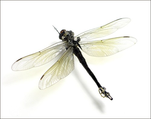 insectrobo4.jpg (500×393)