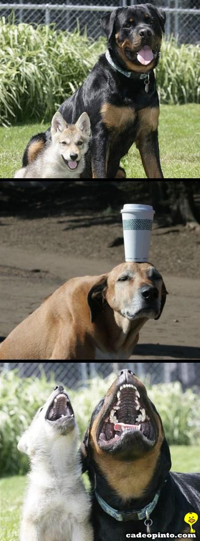 cachorroequilibra.jpg (450×1214)